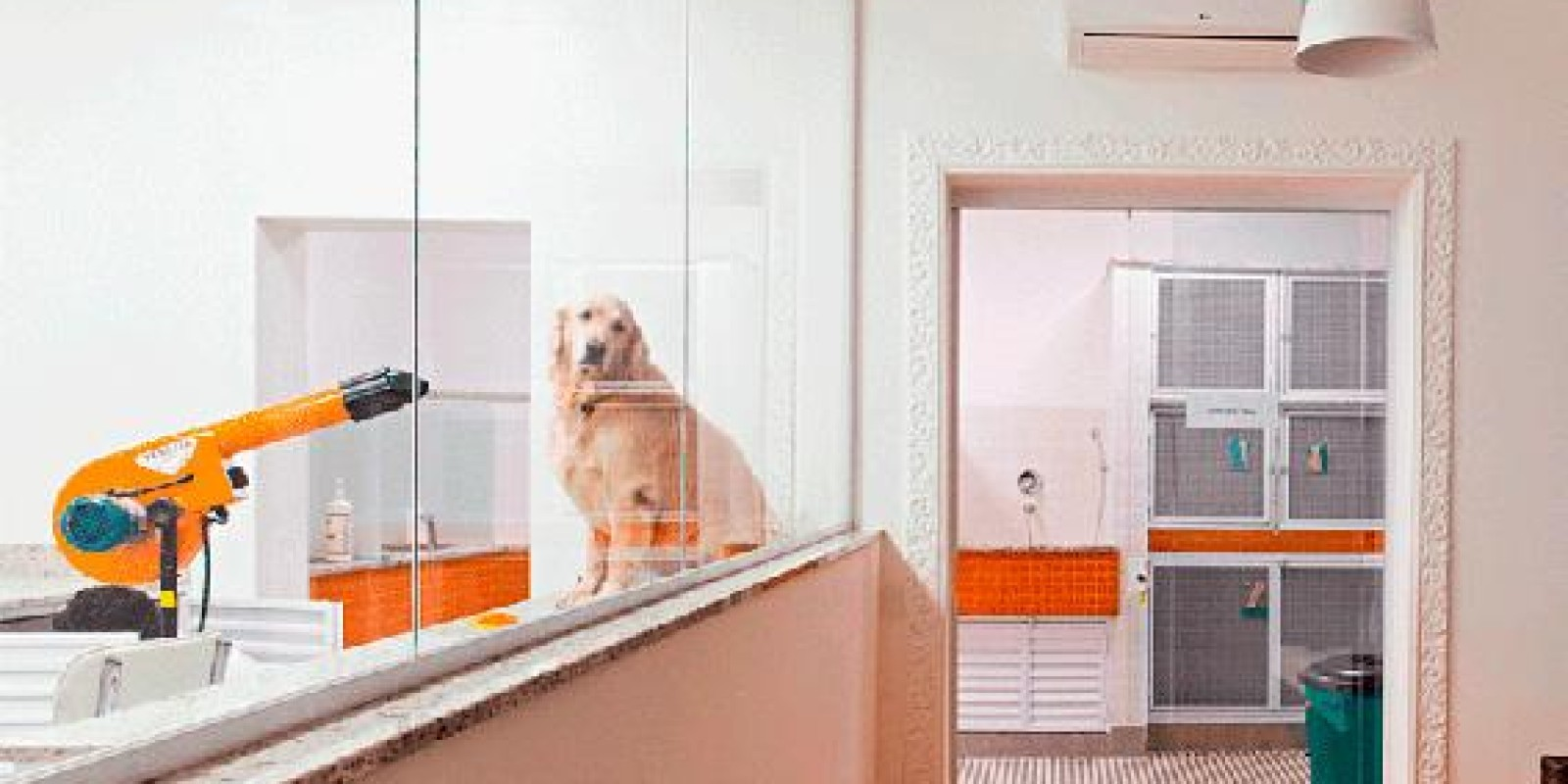 Pet shops terão de tornar visíveis os serviços de banho e tosa